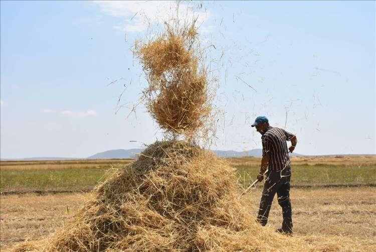 Çiftçilerin Sıcak Havada  Hasat Mesaisi Devam Ediyor