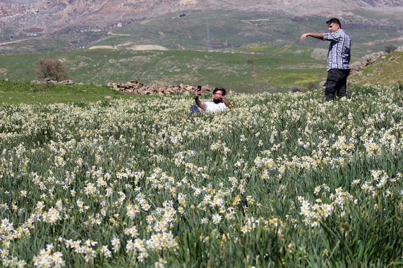 Kurtalan Dağlarında Nergis Çiçeği Açtı