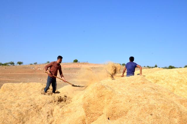 Kurtalan'da  çiftçilerin kışa hazırlığı şimdiden başladı