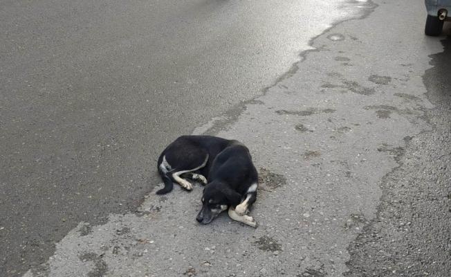 Kurtalan'da yaralı köpek tedavi altına alındı