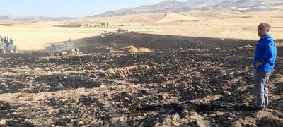Kurtalan'da 50 dönümlük buğday ekili tarla yandı